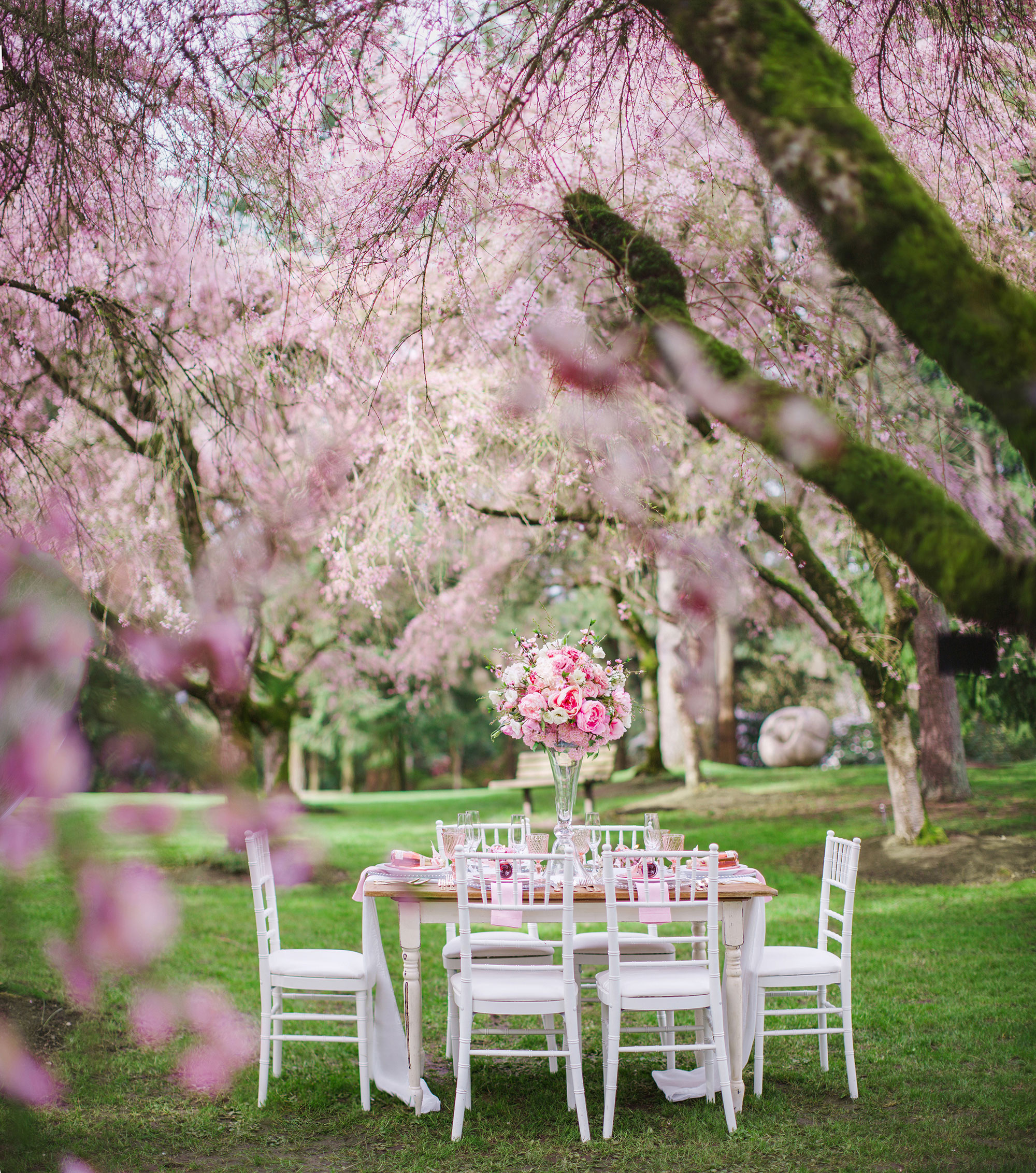 a wedding romance under the cherry blossoms