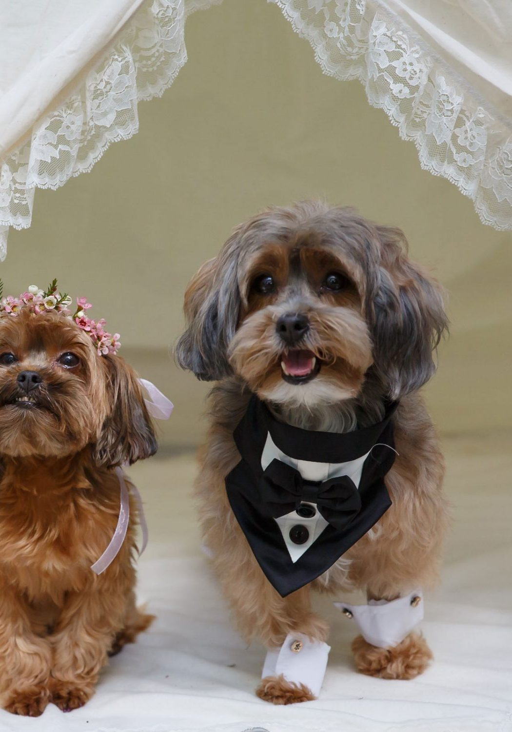 Coco & Truffles: An Adorable Puppy Wedding. Dogs in weddings