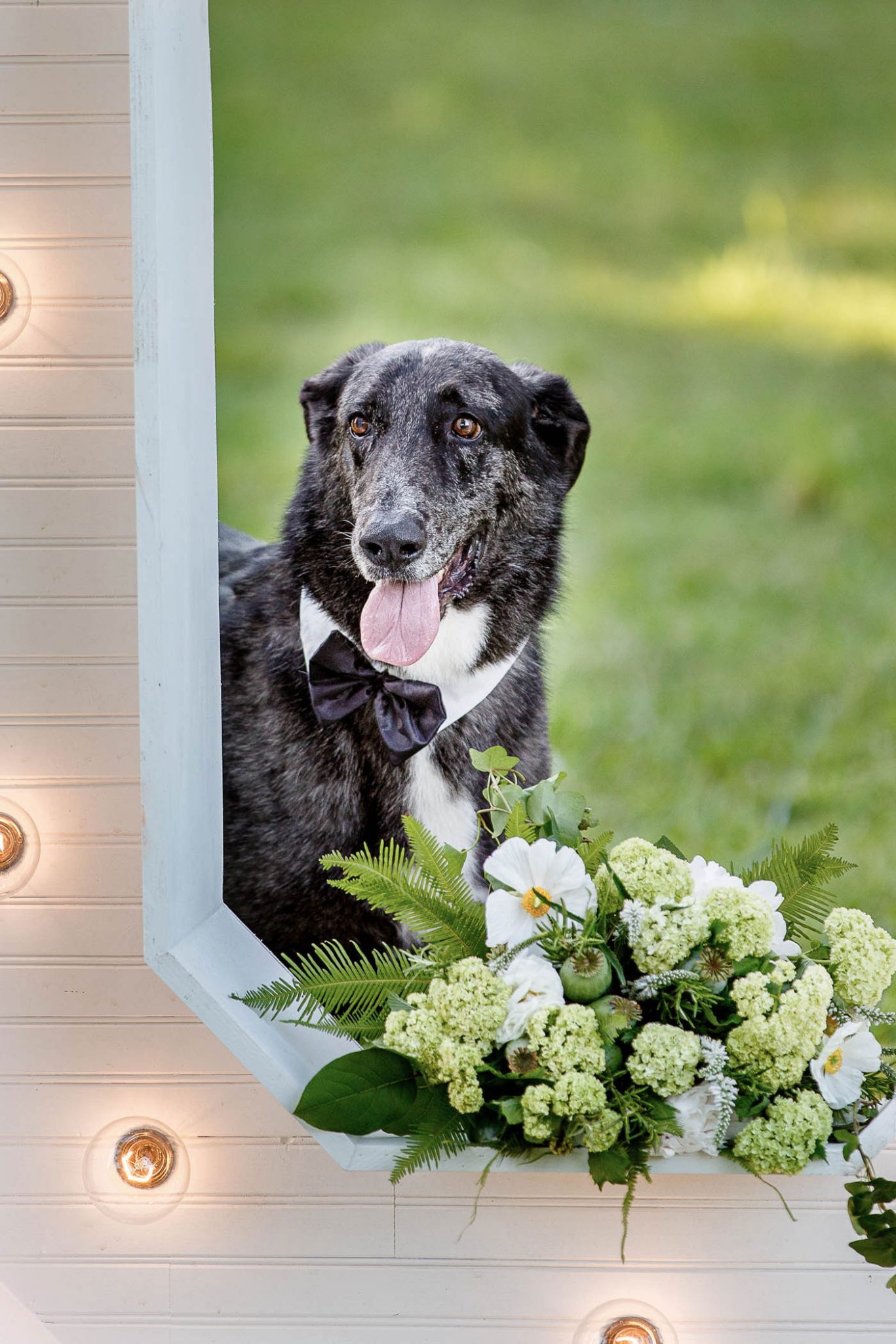 Dog | Spring Garden Wedding