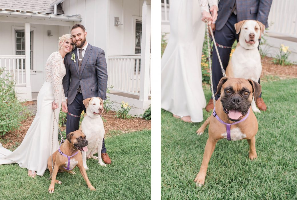 Dogs | | A Romantic outdoor wedding in Denver, Colorado