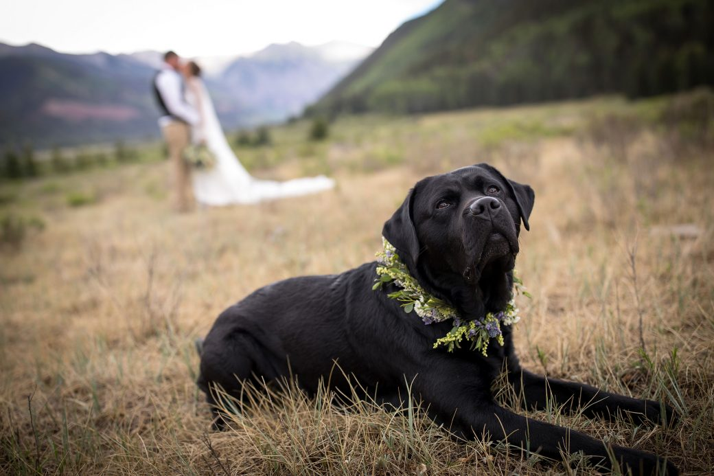 Private vows on the beautiful valley floor of Telluride, Colorado