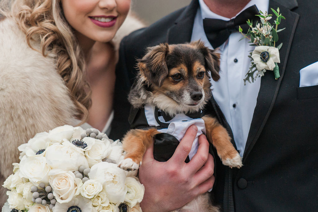 Puppy | New Years Eve Wedding in Vermont
